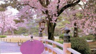 Le migliori cose da fare in primavera a Tokyo nel 2015
